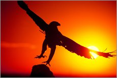 Wall Stickers  A golden eagle flies at dawn - Dave Welling