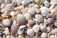 Wall sticker  Shell collection - Rob Tilley