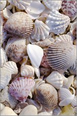 Wall sticker  Shells on the beach - Rob Tilley