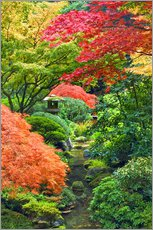 Gallery print  Maple in the Japanese garden - Don Paulson