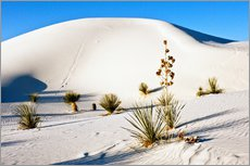 Wall Stickers  White Sands National Monument - Transverse Dunes and Soaptree Yucca - Bernard Friel