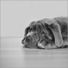 Gallery print  So a dog´s life I - Heidi Bollich