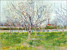 Gallery print  Blossoming orchard - Vincent van Gogh