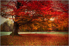 Gallery print  Finest autumn - Hannes Cmarits