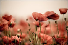Gallery print  Red poppy flowers 05 - Nailia Schwarz