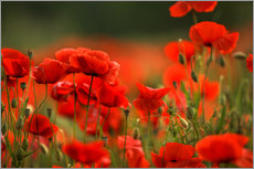Gallery Print  Red Poppy Flowers 14 - Nailia Schwarz