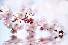 Wall Stickers Cherry Blossoms