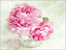 Wall Stickers pink ranunculus