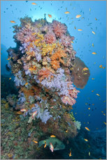 Gallery print  Colourful reef scene - Mathieu Meur