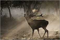 Wall sticker  Deer in the forest - Alex Saberi