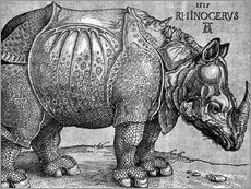 Gallery print  The Rhinoceros - Albrecht Dürer