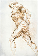 Gallery print  Anatomical study - Peter Paul Rubens