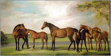 Wall sticker Mares, foals and an approaching storm