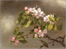 Gallery Print  Apple Blossoms and a Hummingbird - Martin Johnson Heade