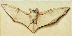 Gallery print  Bat with spread wings - Hans Holbein d.J.