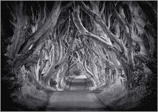 Wall sticker The Dark Hedges