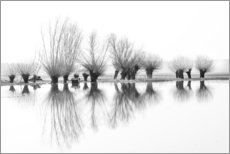 Gallery print  Willow trees in the mirror image of the flood - Ingo Gerlach