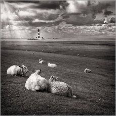 Wall sticker  Talking Sheep - Carsten Meyerdierks