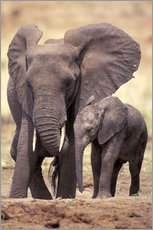 Wall sticker  Elephants at the Tarangire river - Art Wolfe