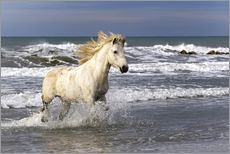Wall sticker Camargue horse in the surf