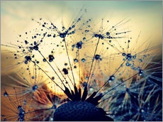 Wall sticker  Dandelion in the sunset - Julia Delgado