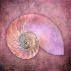 Gallery print  Sea shell - INA FineArt