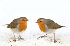 Gallery print  Robin - WildlifePhotography