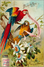 Gallery print  Parrots, macaws and passionflowers - European School