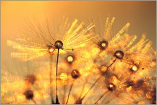 Gallery print  Dandelion golden beads - Julia Delgado