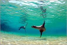 Gallery print  Sea lion lagoon Galapagos Islands - Paul Kennedy