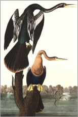Wall sticker  Anhinga - John James Audubon