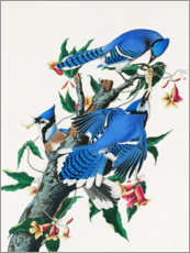 Wall sticker  Blue Jays - John James Audubon