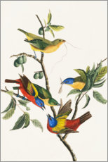 Gallery print  Buntings, 1827 - John James Audubon