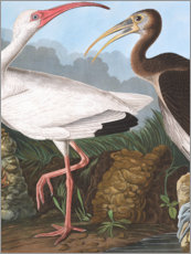 Wall sticker  Heron - John James Audubon