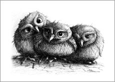Gallery print  Three young owls - owlets - Stefan Kahlhammer