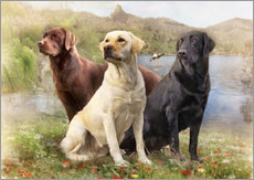 Wall sticker  Labrador Retrievers - Selina Morgan