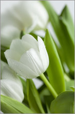 Wall Sticker  White Tulips 02 - Nailia Schwarz