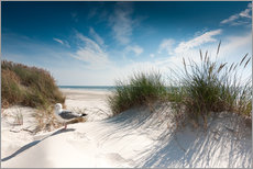 Gallery Print  Sylt - Dune with fine beach grass and seagull - Reiner Würz RWFotoArt