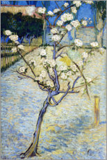 Aluminium print  Blossoming pear tree - Vincent van Gogh