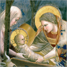 Gallery print  Nativity (Detail) - Giotto di Bondone