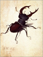 Wall sticker  Stag beetle - Albrecht Dürer