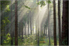 Wall sticker  Sun rays in the forest - Dave Derbis