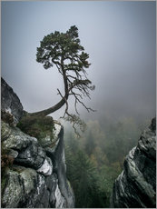 Gallery print  Lonely Tree on the Brink - Andreas Wonisch