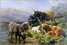 Wall Stickers  Highland Cattle - William Watson