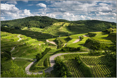 Gallery print  Vine yards in Kaiserstuhl during Spring Time - Andreas Wonisch