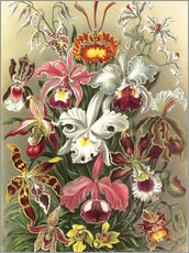 Wall sticker  Orchidae - Ernst Haeckel