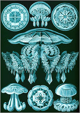 Wall sticker  Discomedusae 88 - Ernst Haeckel