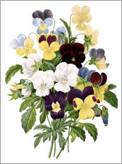 Wall Stickers  Bouquet of Pansies - Pierre Joseph Redouté