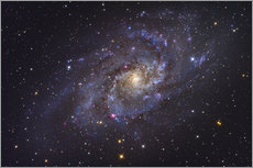 Gallery print  The Triangulum Galaxy - Roth Ritter