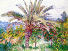Premium poster  Palm tree at Bordighera - Claude Monet